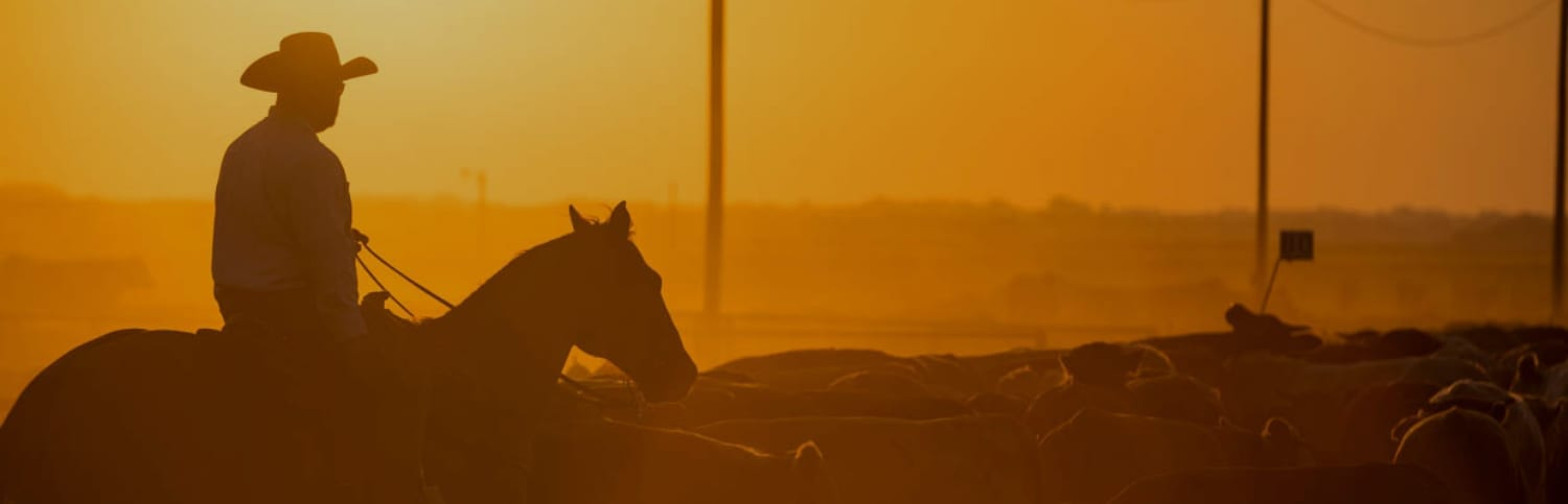 Rancher at sunset